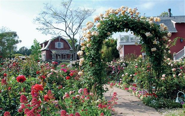 Ms Streisand S Butterscotch Roses Climbing Rose Garden Design Dream Garden Barbra Streisand