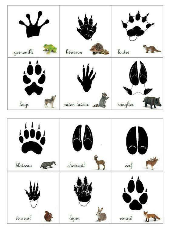 Empreintes animaux de la for t activit s enfants - Animaux de la jungle maternelle ...