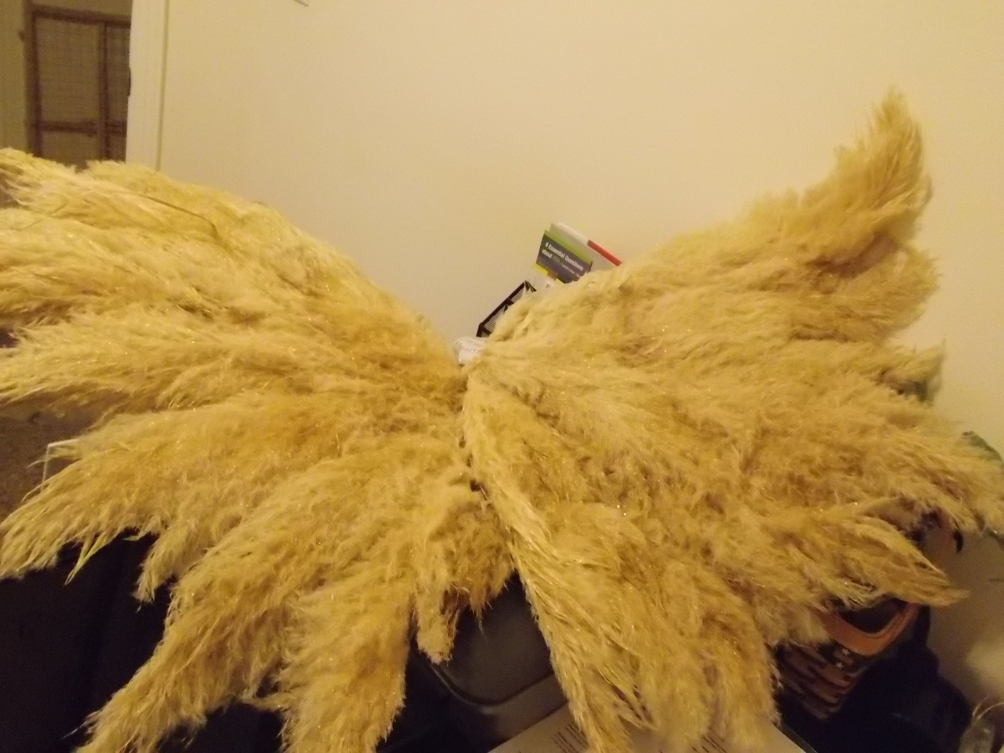 My Homemade Angel wings made out of Pampas Grass | Arts and Crafts ...