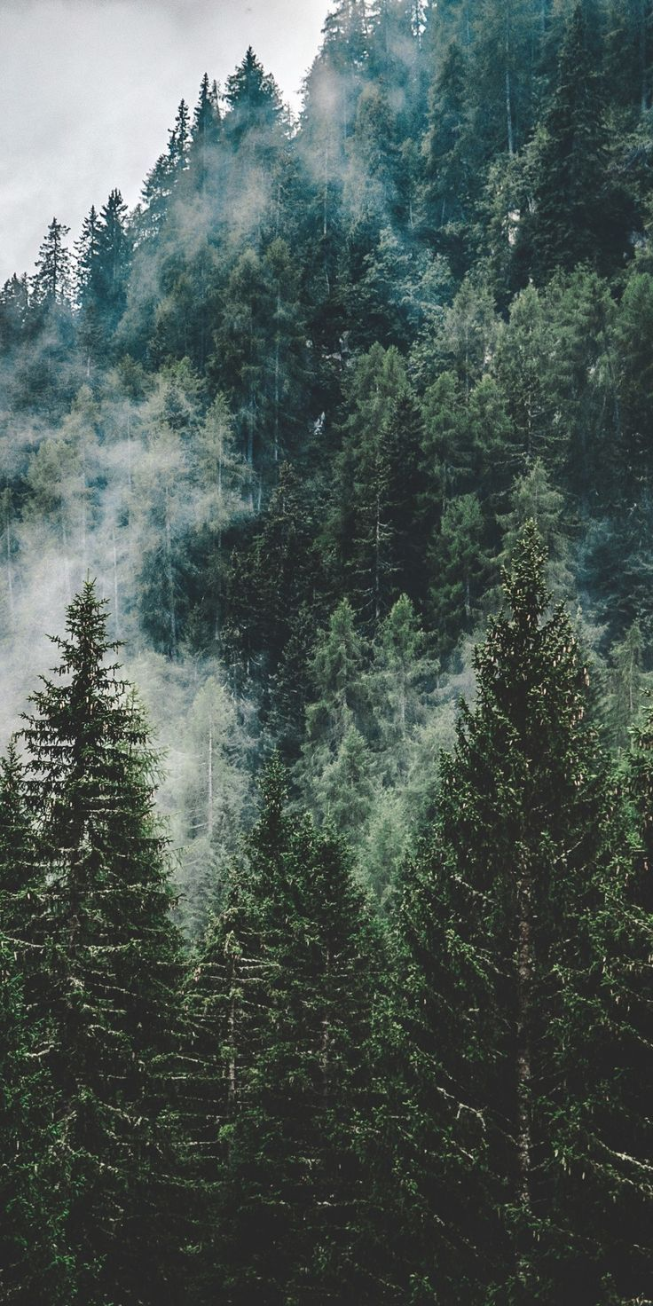 Mist, green trees, nature, Italy, 1080x2160 wallpaper - #1080x2160 #green #italy #Mist #nature #trees #wallpaper