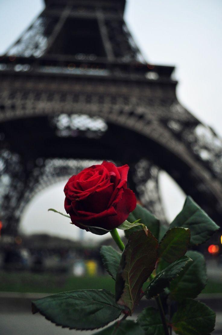 Paris is always a good idea.. - #good #Idea #Paris... - #fondecran #Good #idea - roses - Wallpaper