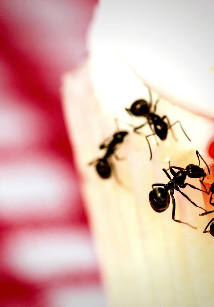 Ten Ways To Get Rid Of Ants Naturally Ten Things About Rid Of Ants Get Rid Of Ants Nature