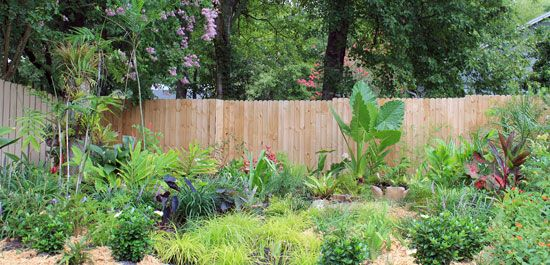 The Rainforest Garden: 7 Ways to Fix an Ugly Garden with Plants