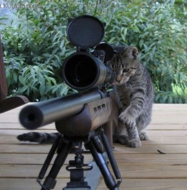 Wheres that darn dog guns pinterest dog cat dog - Pictures of funny animals with guns ...