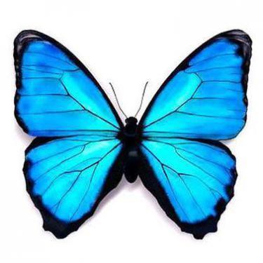 Blue 3d Butterfly Tattoo Design Tetovani Motyl Pinterest