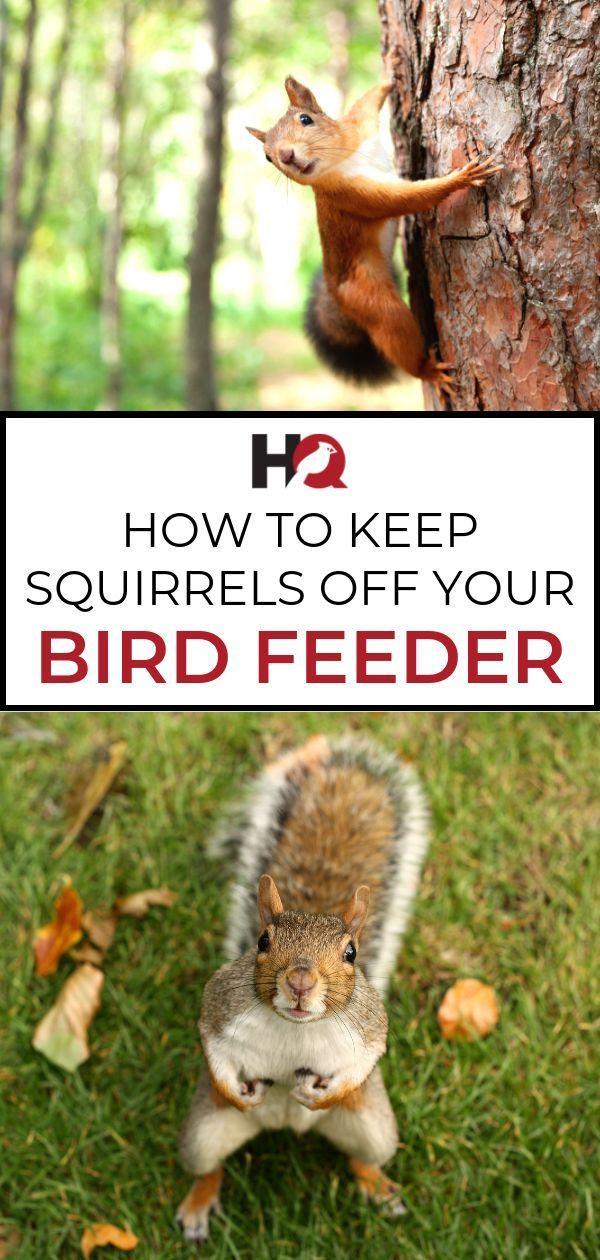 8 Effective Ways To Keep Squirrels Off Your Bird Feeders