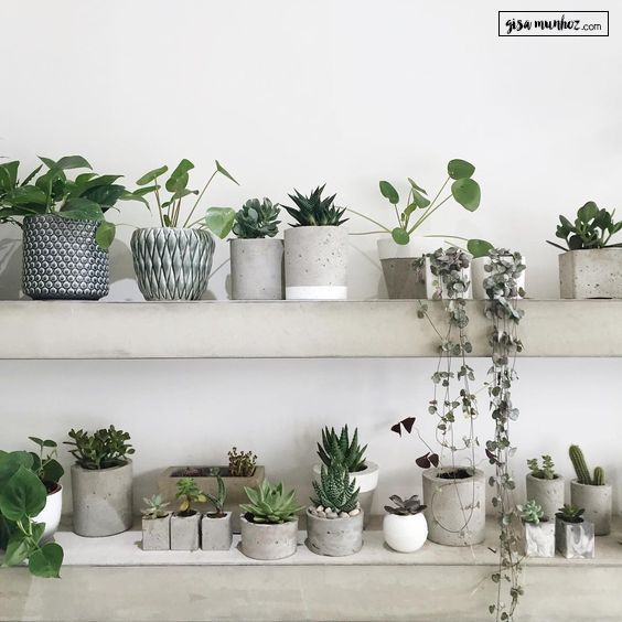 Vaso De Concreto Gisamunhoz 5 Jpg 564 564 Plants Indoor Plant