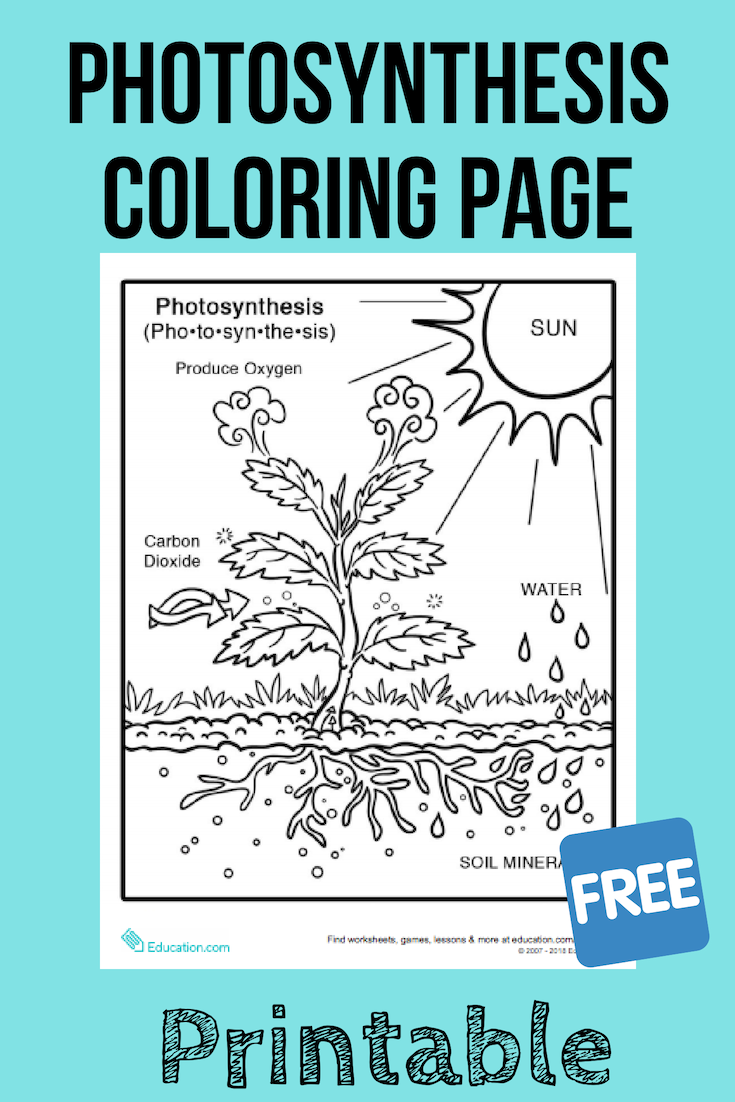 Photosynthesis Coloring Page Photosynthesis