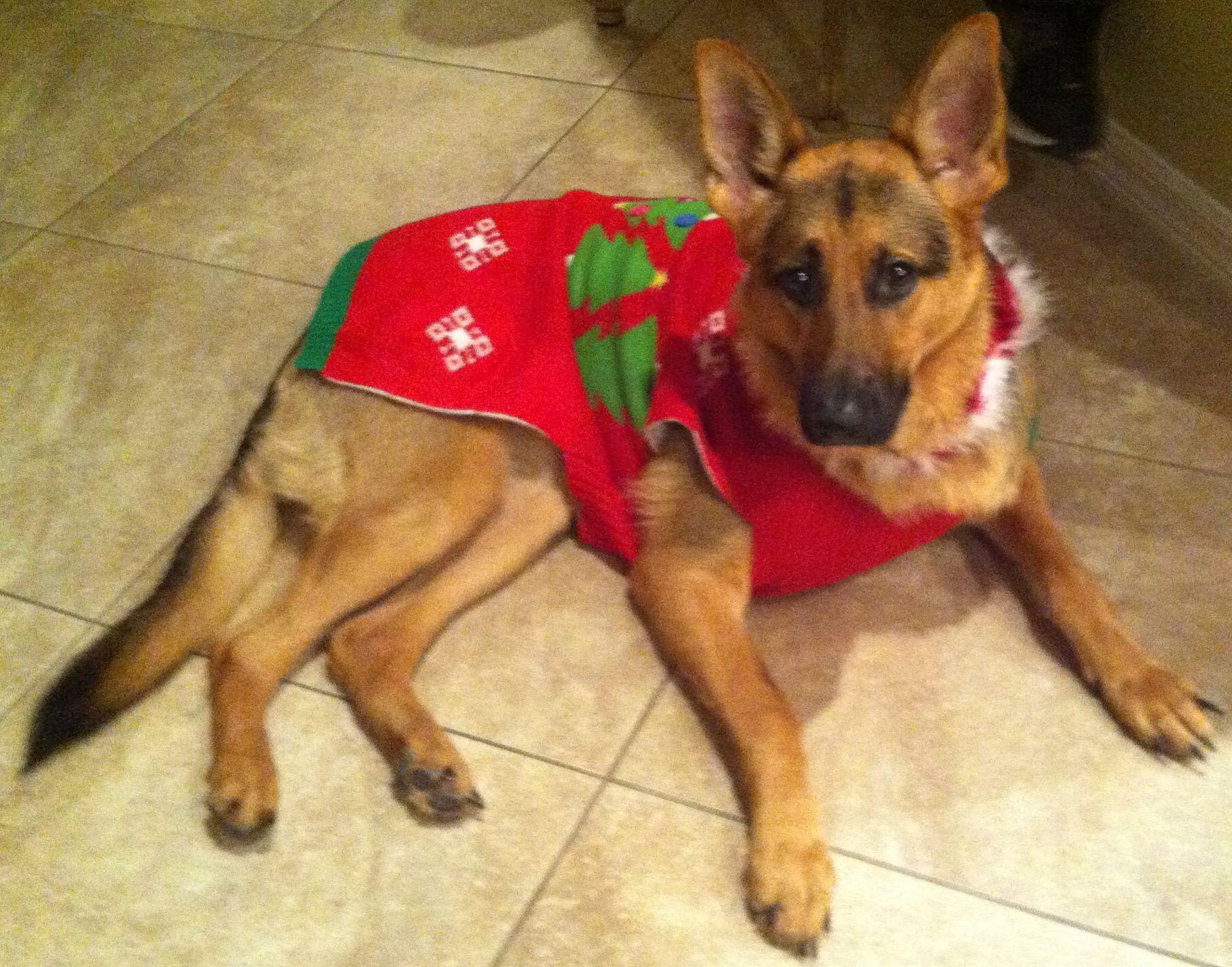 German Shepherd Christmas Sweater.Pin On German Shepards