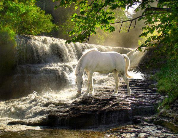 Epingle Sur Horse Beautiful