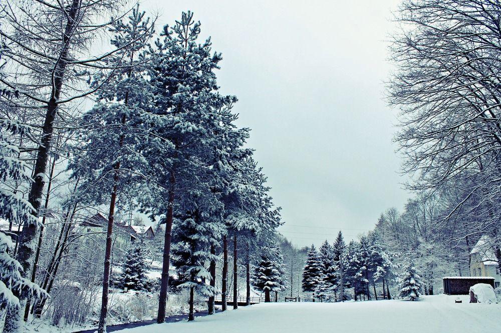 Schneeglitter