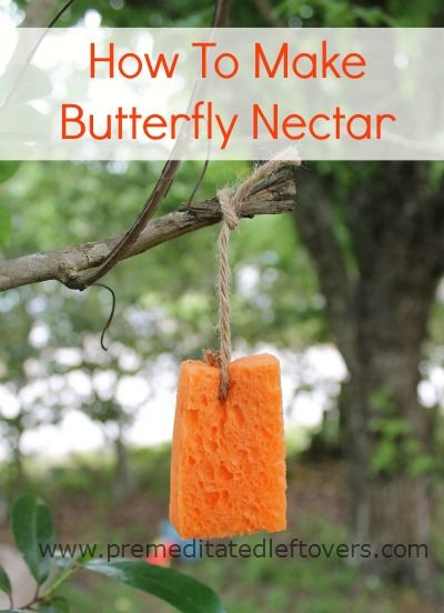How To Make Butterfly Nectar   Make A Quick And Simple Butterfly Nectar  Recipe To Draw Butterflies Into Your Garden.