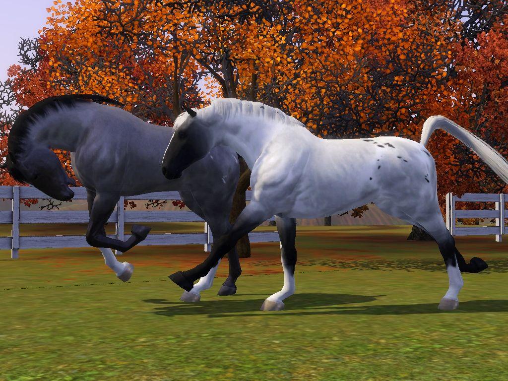 Картинки с лошадьми с симс