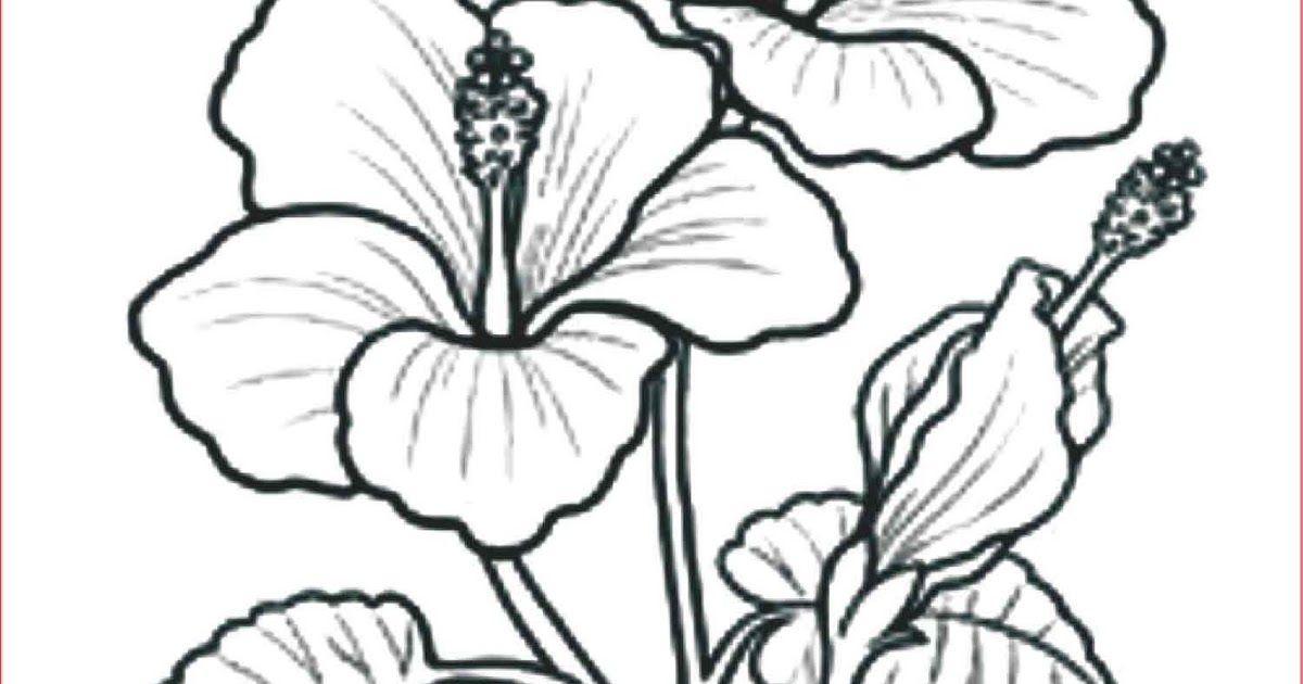 16 Gambar Bunga Mawar Yang Mudah Dibuat Jika Anda Tidak Dapat Membuat Gambarnya Bisa Juga Gambar Tersebut Di Unduh Melalui Interne Di 2020 Gambar Bunga Gambar Grafit
