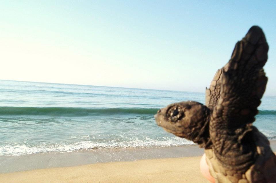 Las tortugas pueden volar!