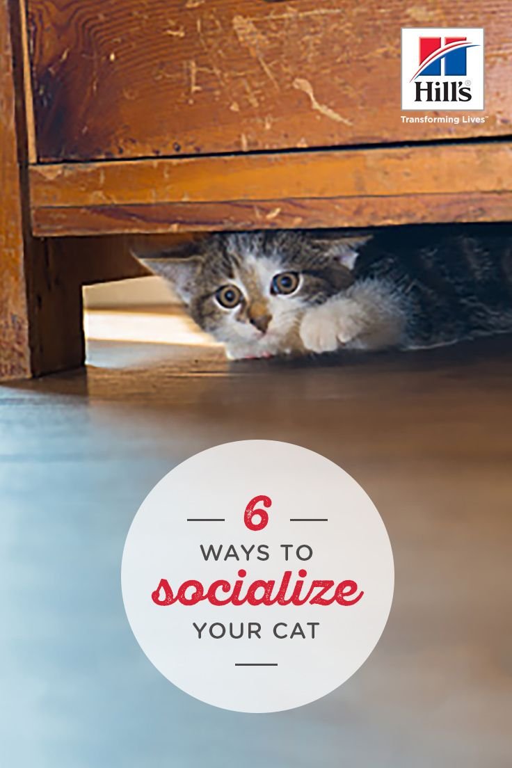 6 Cat Socialization Tips To Help Yours Get To Know You Cats Taking Cat Cat Care