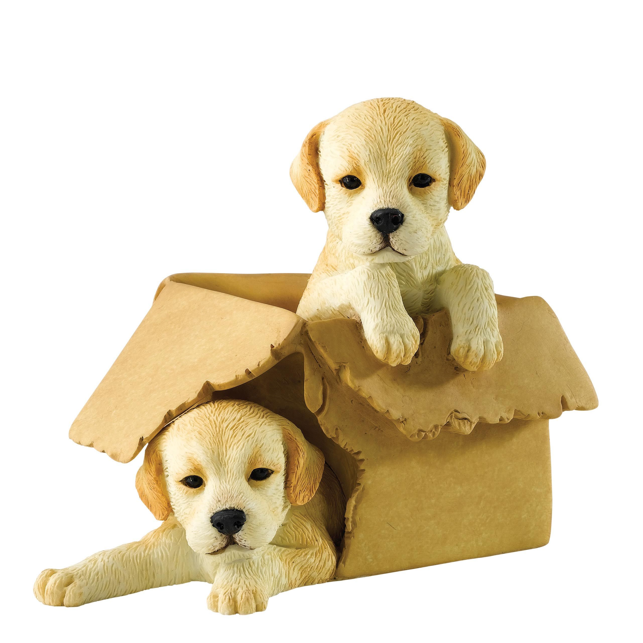 A27509 Boxed It (Golden) playful labradors puppies