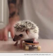 Google Image Result for http://justcuteanimals.com/wp-content/uploads/2012/11/cute-animal-skateboard-baby-hedgehog-table-pics.jpg