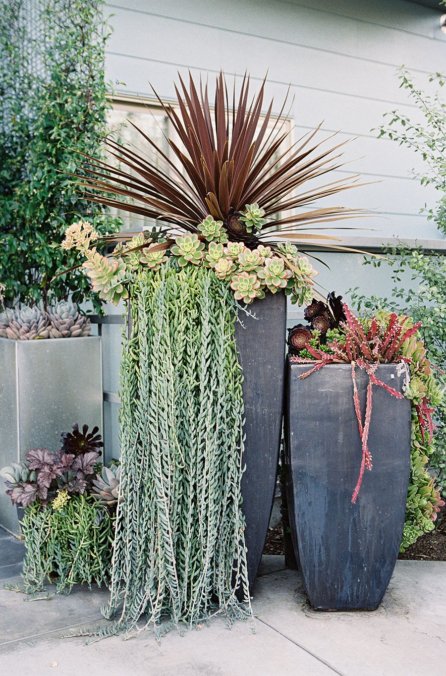 Manhattan beach wedding at the shade hotel succulent Can succulents grow outside