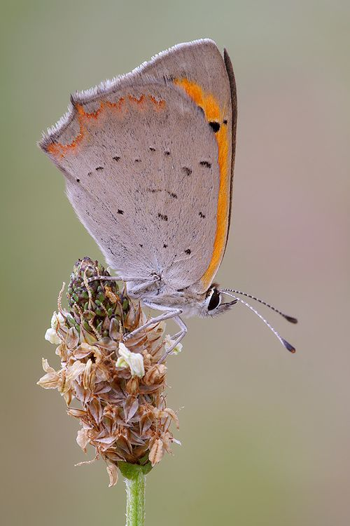Small copper by ~nele102 on deviantART