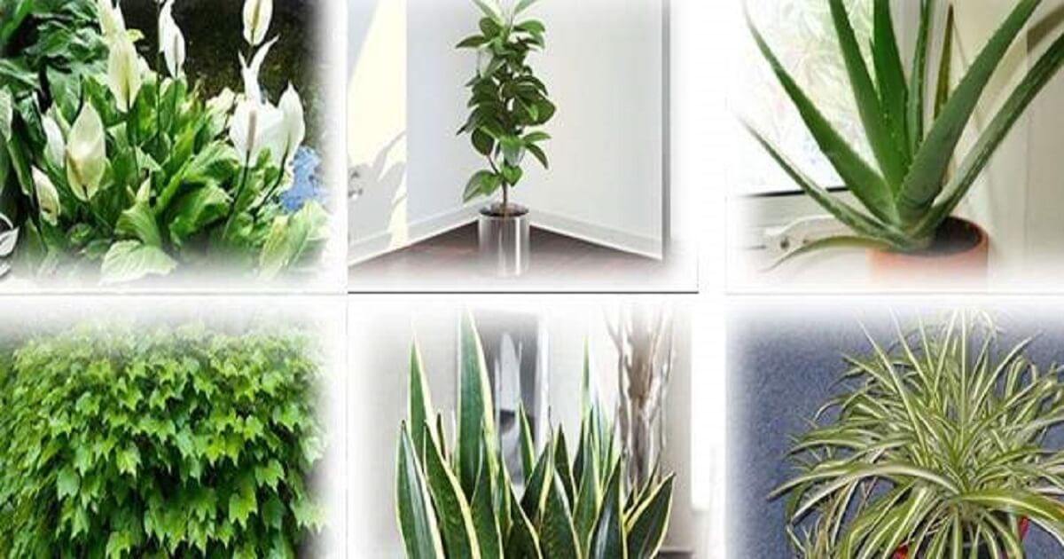 Molte persone amano avere le piante in casa, mentre altre ...
