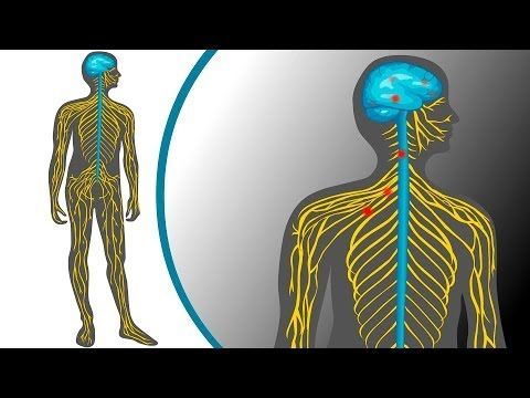 Animation: Action potential | Big Picture | Anatomy - Neurons ...