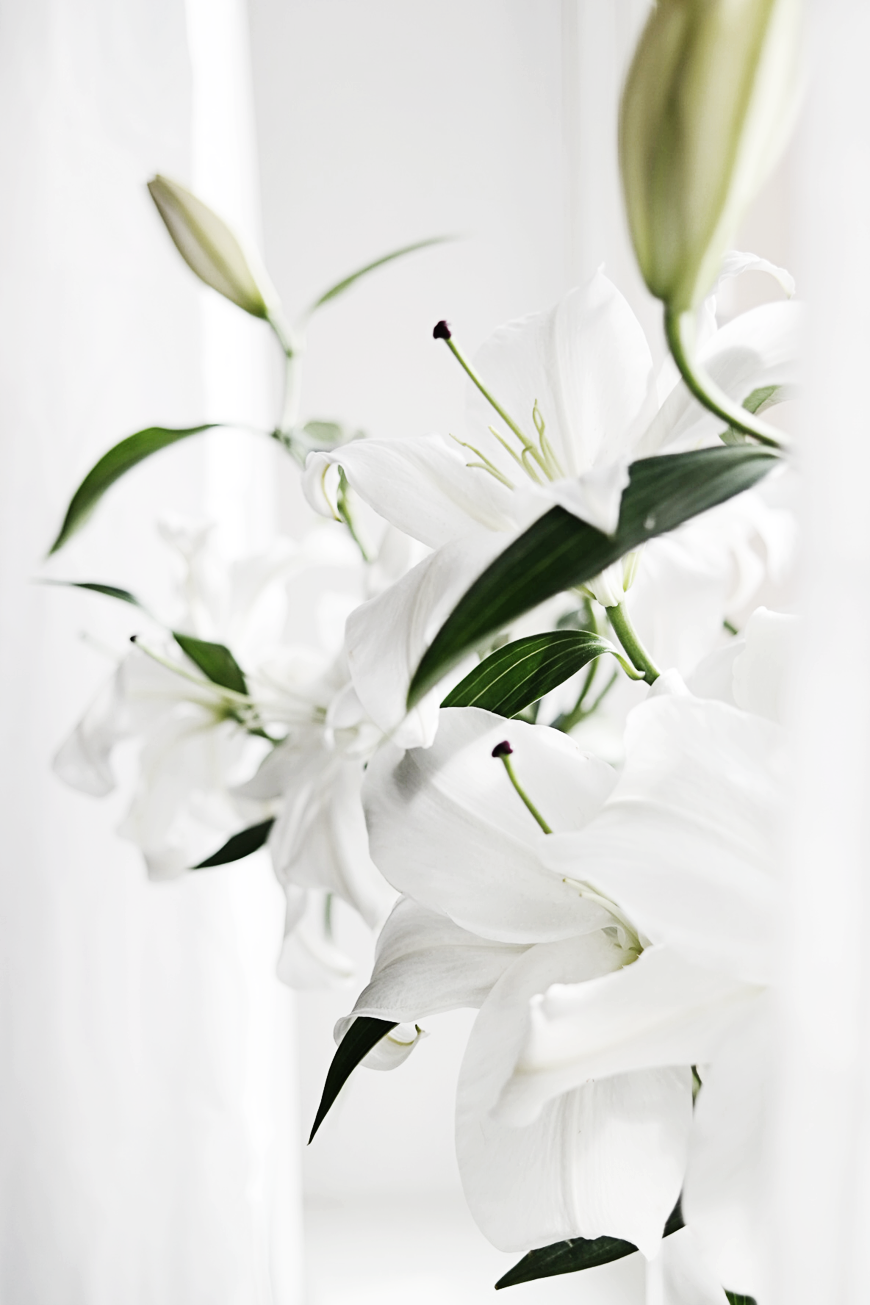 white lilies | Flowers | Pinterest | White lilies, Flowers and Plants