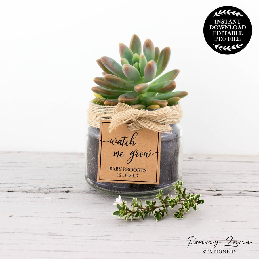 Watch me Grow 2 Succulent Baby Shower Favor Tag