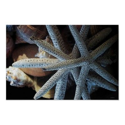 Starfish and Shell 36 x 24 Poster by SteveBrownleeArt