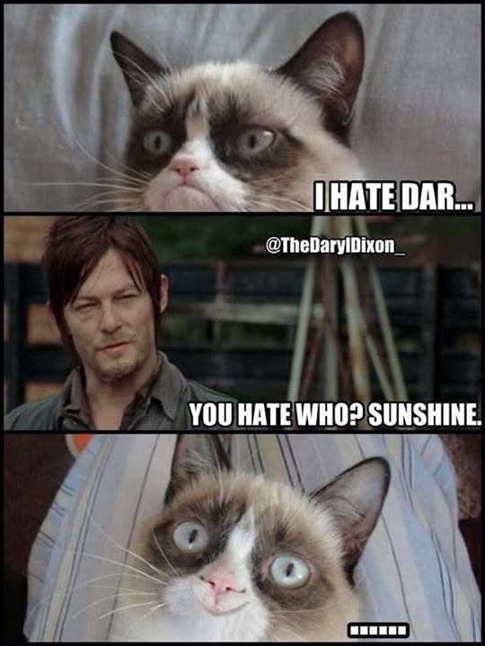 Even Grumpy Cat loves Daryl