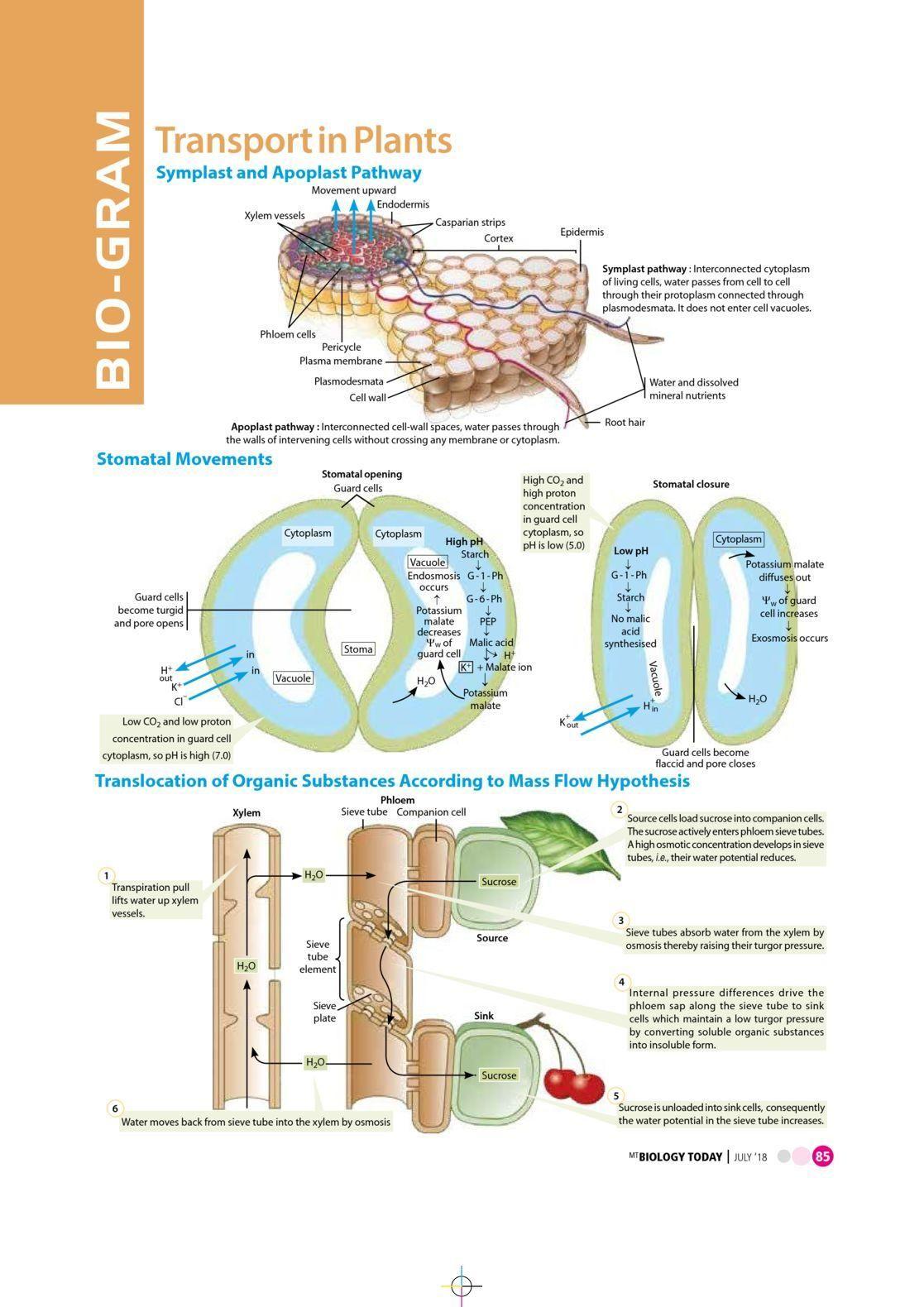 Pin On Biology Notes Neet