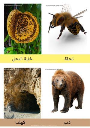 Pin By Shamsaat شمسات On المطبوعات اوراق العمل تدريبات مذاكرات كرسات علوم معارف عامة وحداتي رياض الاطفال Brown Bear Animals Bear