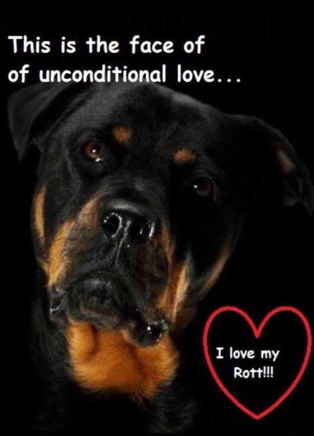 Pin By Barb Kleinfelter On I Need Puppy Rottweiler Dog Rottweiler Rottweiler Love