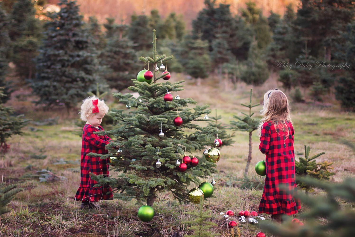 Tis The Season Outdoor Christmas Photos Christmas Tree Farm Photos Christmas Tree Photoshoot