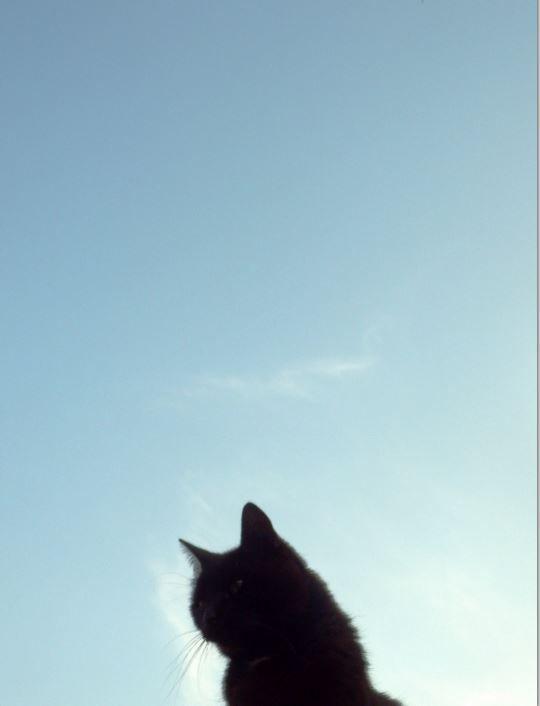 mijn kat zoekt het hogerop
