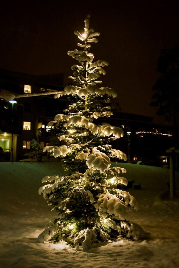 The Christmas tree today — By Joaaso from Fotopedia.com