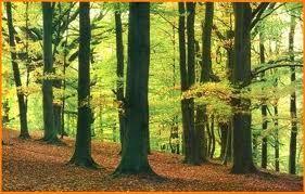 Los bosques caducifolios de las regiones templadas están prácticamente limitados a zonas continentales de latitudes medias del hemisferio norte