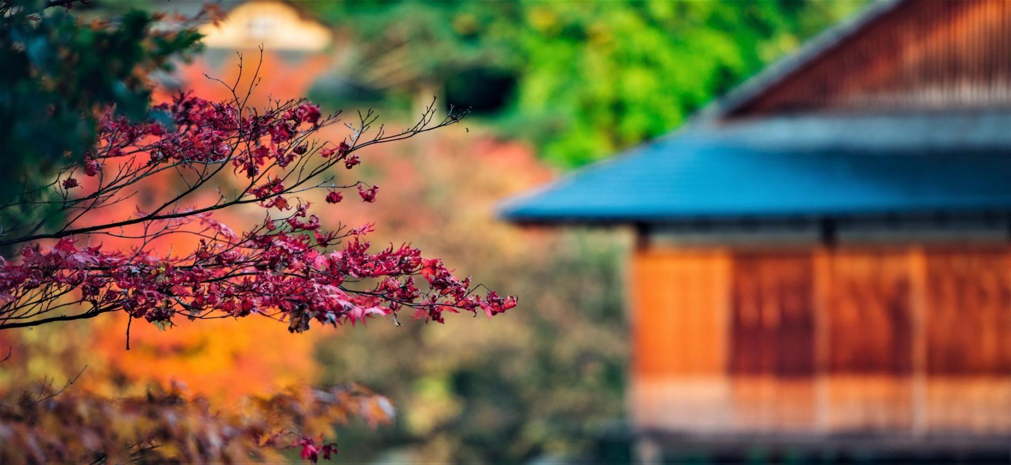 Jardin Japonais Visit Hasselt Japanse Tuin Tuin