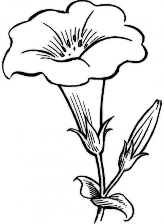 flower Page Printable Coloring Sheets | Flower Coloring Pages ...