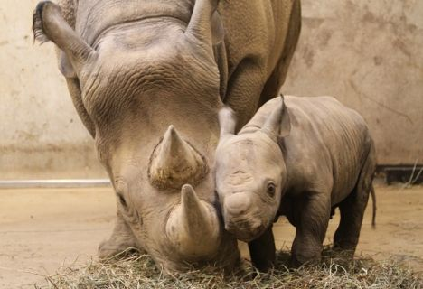 a wil baby rhino. so sad what is happening to them in the wild..their horns are not worth taking their lives!!