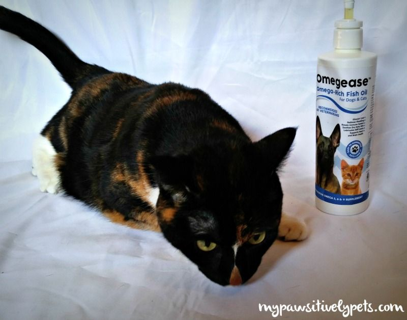 Boosting Your Pet's Diet with Omegease Fish Oil - review and giveaway