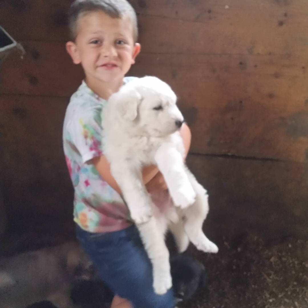Windy Acres Puppies Puppy Mill References