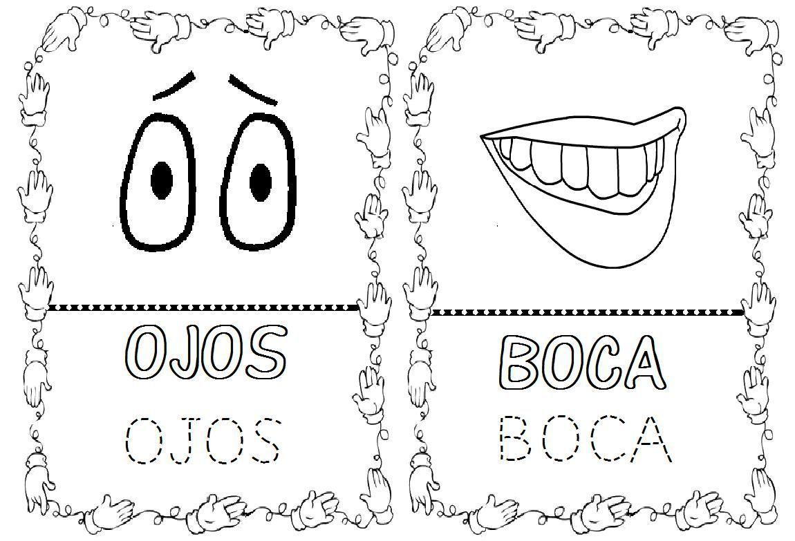 Dibujos De Aplicacio De Partes De La Cara: Dibujos Para Colorear Del Cuerpo Humano Para Nios