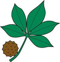 Ohio State Buckeye Leaf Drawing Buckeye Leaf Logo Buckeye