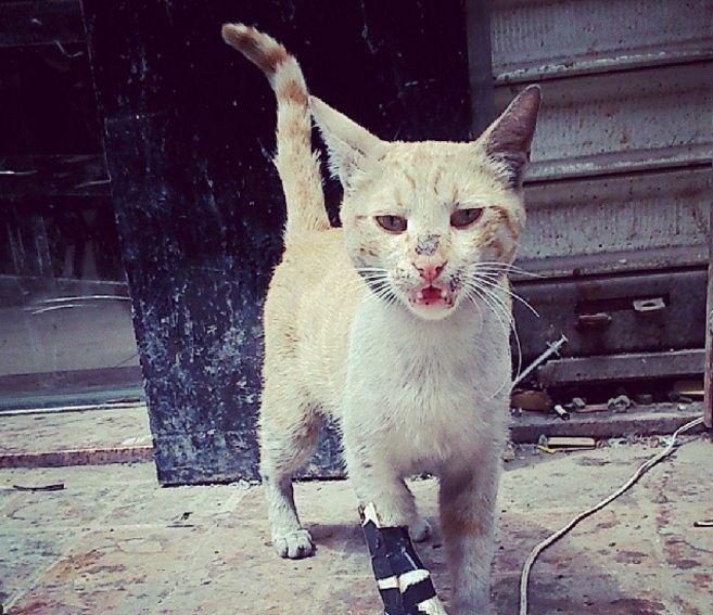 إيه أنا منيح #حلب #سوريا #قطط #cats Yeah, I'm fine #Aleppo #Syria