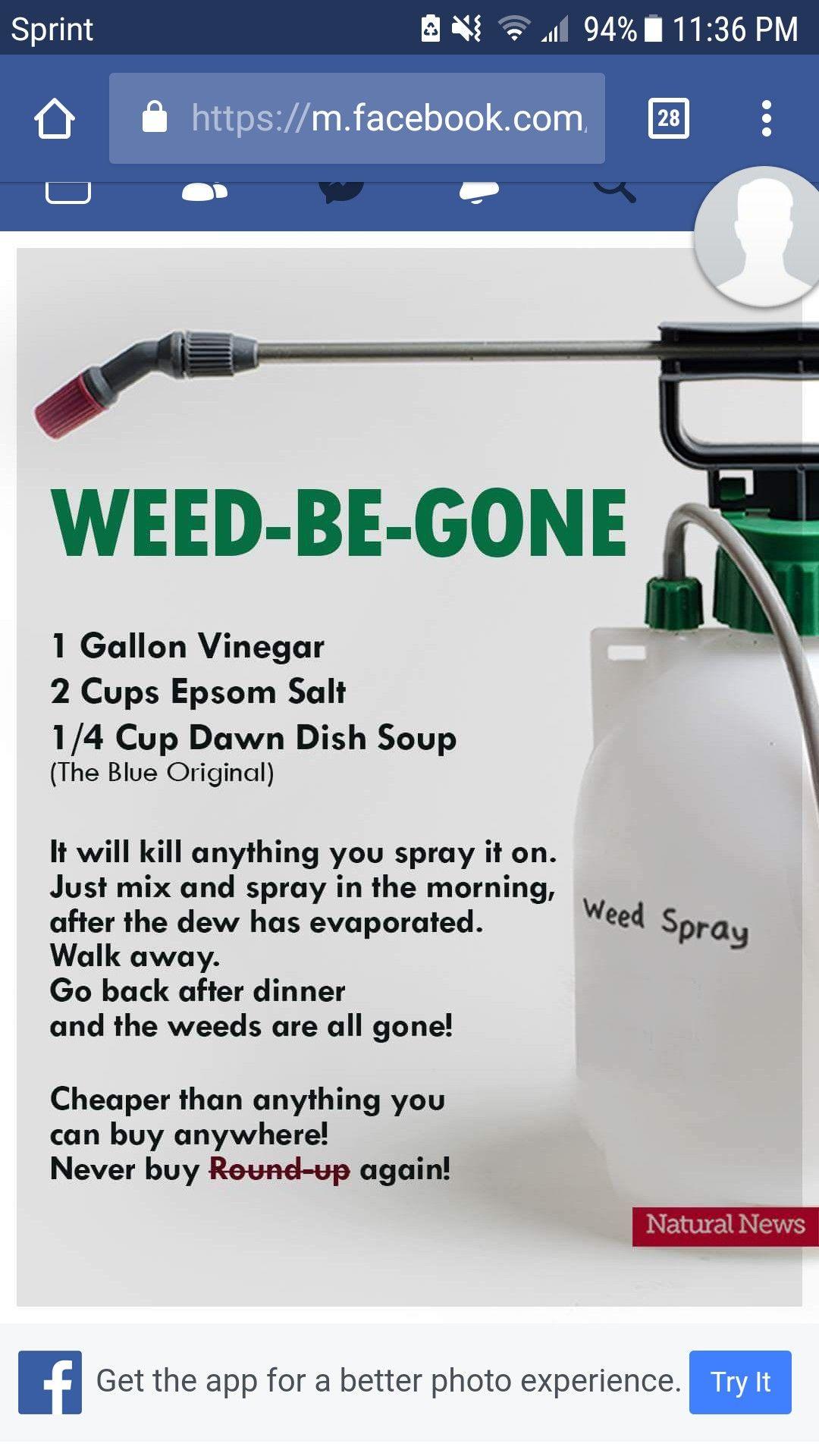 Vinegar epsom salt and dish soap ud fantastic weed killer yard