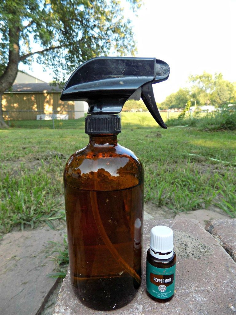 See easy I spray this around the perimeter of my garden and even
