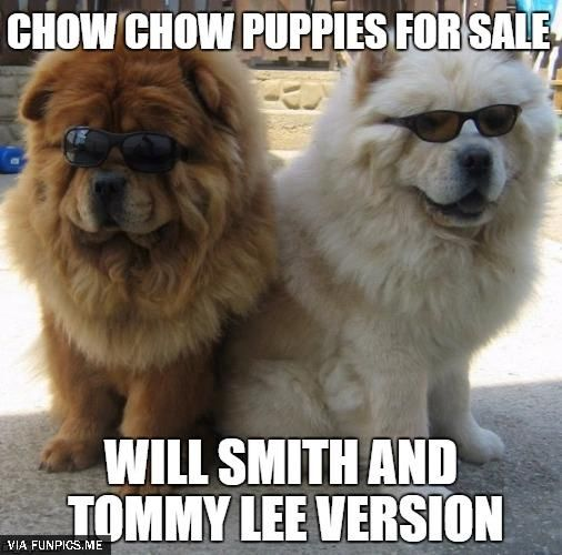 Chow Chow Puppies For Sale Puppies Chow Chow Chow Puppies For Sale