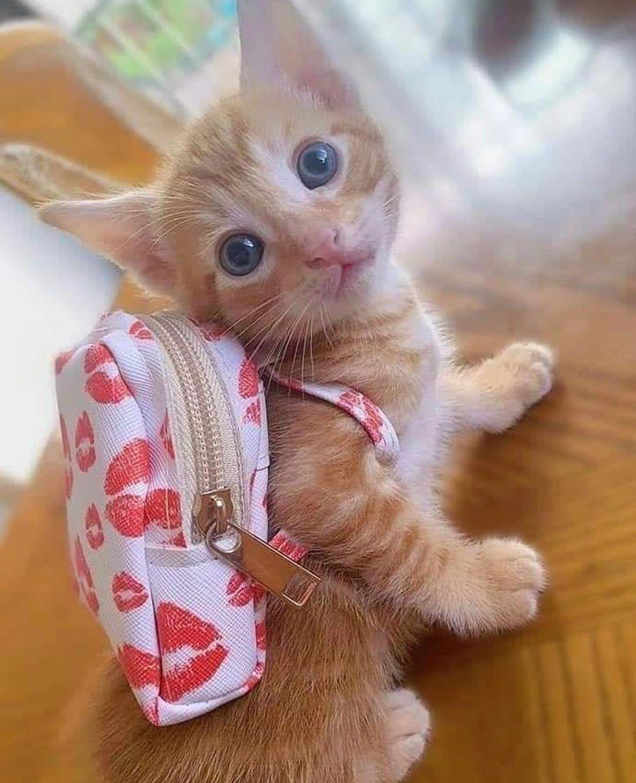 Pin By Elza De Jesus On Sweet Cats In 2020 Cute Baby Cats Cute Little Kittens Baby Cats