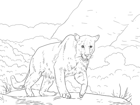 Puma Para Colorear Coloring Pages Colorful Pictures Free Hd Wallpapers